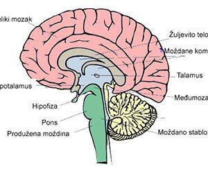Nervni sistem