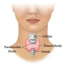 Štitna žlijezda/Hormoni